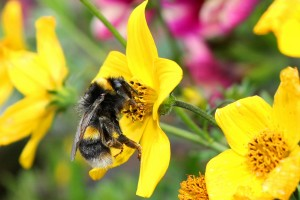 attracting-bees-in-the-garden